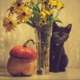一只黑小猫和南瓜 免版税图库摄影