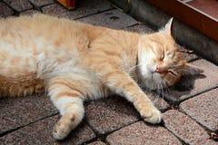 一只轻松的猫 免版税库存照片
