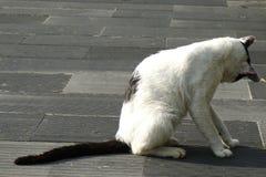 一只黑白猫在公园 免版税图库摄影
