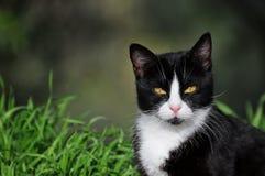 猫的画象 免版税库存照片