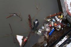一只死的乌鸦在充分城市池塘垃圾在Vidnoe 免版税库存照片