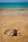 一只死的乌龟的骨骼在热带海滩的 免版税库存照片