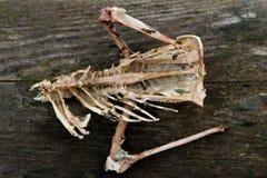 一只死的鸟的遗骸 免版税库存图片