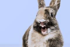 一只滑稽的兔子的特写镜头 免版税库存图片