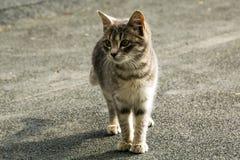 一只离群小猫的画象 免版税库存照片