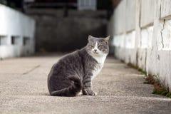 一只离群猫的画象 免版税库存图片