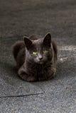 一只离群猫的画象 免版税图库摄影