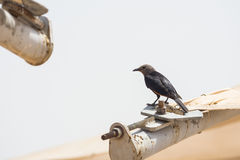 一只黄色技巧飞过的鸟 免版税图库摄影