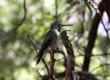 一只绿色鸟在森林 免版税库存图片