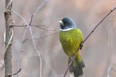 一只绿色鸟 免版税库存图片