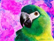 一只绿色鹦鹉的原始的绘画 皇族释放例证