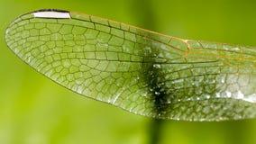 一只蜻蜓的翼作为背景 免版税库存照片