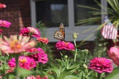 一只蝴蝶在庭院里 免版税库存照片