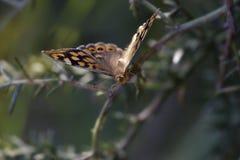 从一只蝴蝶的宏指令在na草甸 库存照片