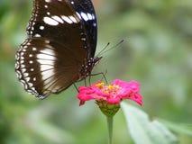 一只蝴蝶的任意宏观射击在花的 免版税库存照片