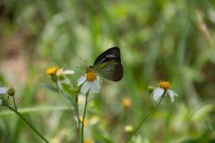 一只蝴蝶 免版税图库摄影