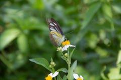 一只蝴蝶 库存图片