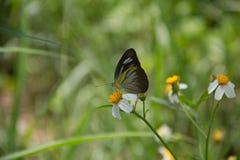 一只蝴蝶 图库摄影