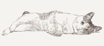 一只说谎的猫的剪影 免版税库存照片