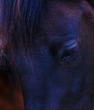 一只黑马眼睛的特写镜头 免版税图库摄影