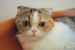 一只兴高采烈的猫 免版税库存图片