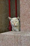 一只fuly猫 免版税库存图片
