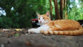 一可爱棕色猫说谎室外在秋天 库存照片