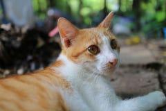 一可爱棕色猫说谎室外 库存图片