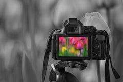 一台数字照相机的特写镜头与一个五颜六色的图象的在活竞争 库存照片
