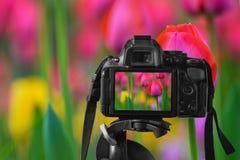 一台数字照相机的特写镜头与一个五颜六色的图象的在活竞争 免版税库存照片