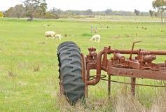 一台老生锈的拖拉机在有吃草在草的绵羊的一个小牧场 库存图片
