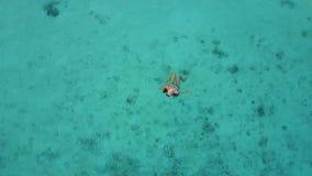 一名可爱的妇女的鸟瞰图漂浮在透明的海的比基尼泳装的 相当美好的女孩游泳在印度洋 股票视频