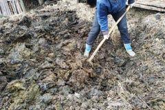 一名妇女在乡下从坑早期的春天选择肥料到城市 库存照片