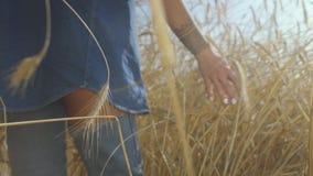一名妇女的手接触黄色麦子耳朵的牛仔裤衣裳的站立在麦田特写镜头 o 影视素材
