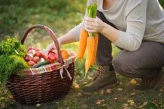 一名妇女的特写镜头有新近地被收获的菜的 库存图片