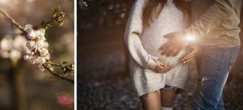 一名孕妇和她的丈夫感人的腹部的特写镜头图象用手 免版税库存图片