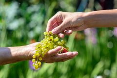 一名年长妇女对待一个少妇莓果和葡萄 免版税库存图片