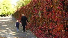 一名年长妇女走与她的小孙子在沿胡同的秋天公园 影视素材