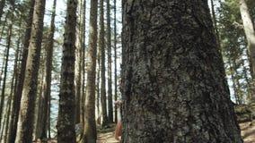 一名愉快的妇女的画象在森林,女孩享用木头,有背包的游人在国家公园,旅行生活方式 股票视频