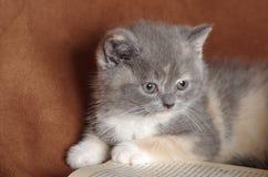 一名明智的小猫猫学生 库存图片