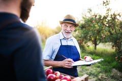 一名老人用儿子采摘苹果在果树园在秋天 免版税图库摄影