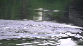 一名轻潜水员的脚在水中 股票录像