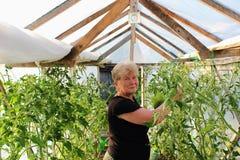 一名年长妇女自温室工作 库存图片