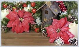 一品红圣诞节背景和贺卡 免版税库存图片