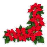 一品红开花圣诞节装饰 免版税库存照片