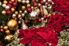 一品红植物和圣诞树与数十件装饰品 免版税库存照片