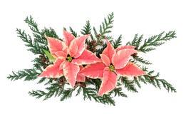 一品红花装饰 免版税库存图片