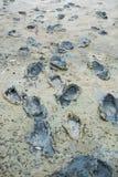 一在泥的赤足和起动的版本记录 免版税库存照片