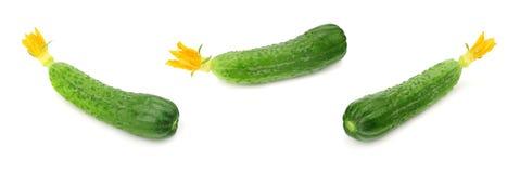 一在白色背景隔绝的新鲜的黄瓜 免版税库存图片