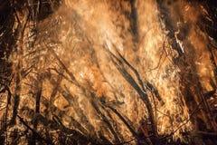 一场大森林火灾的接近的看法 库存图片